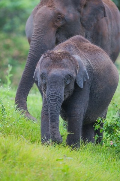 Baby elephant in forest
