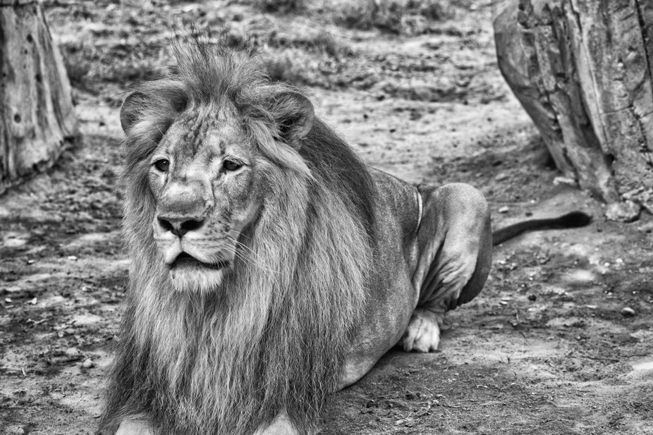 Emirates park zoo. HDR B&W