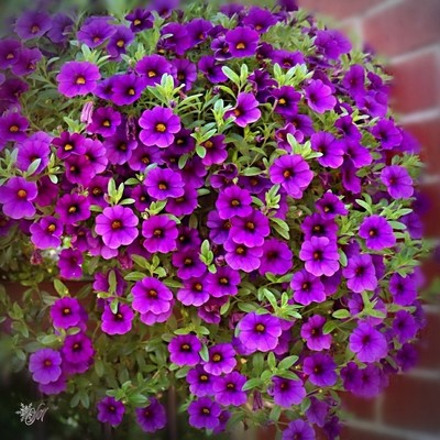 ... purple fall ;) *#hugZz