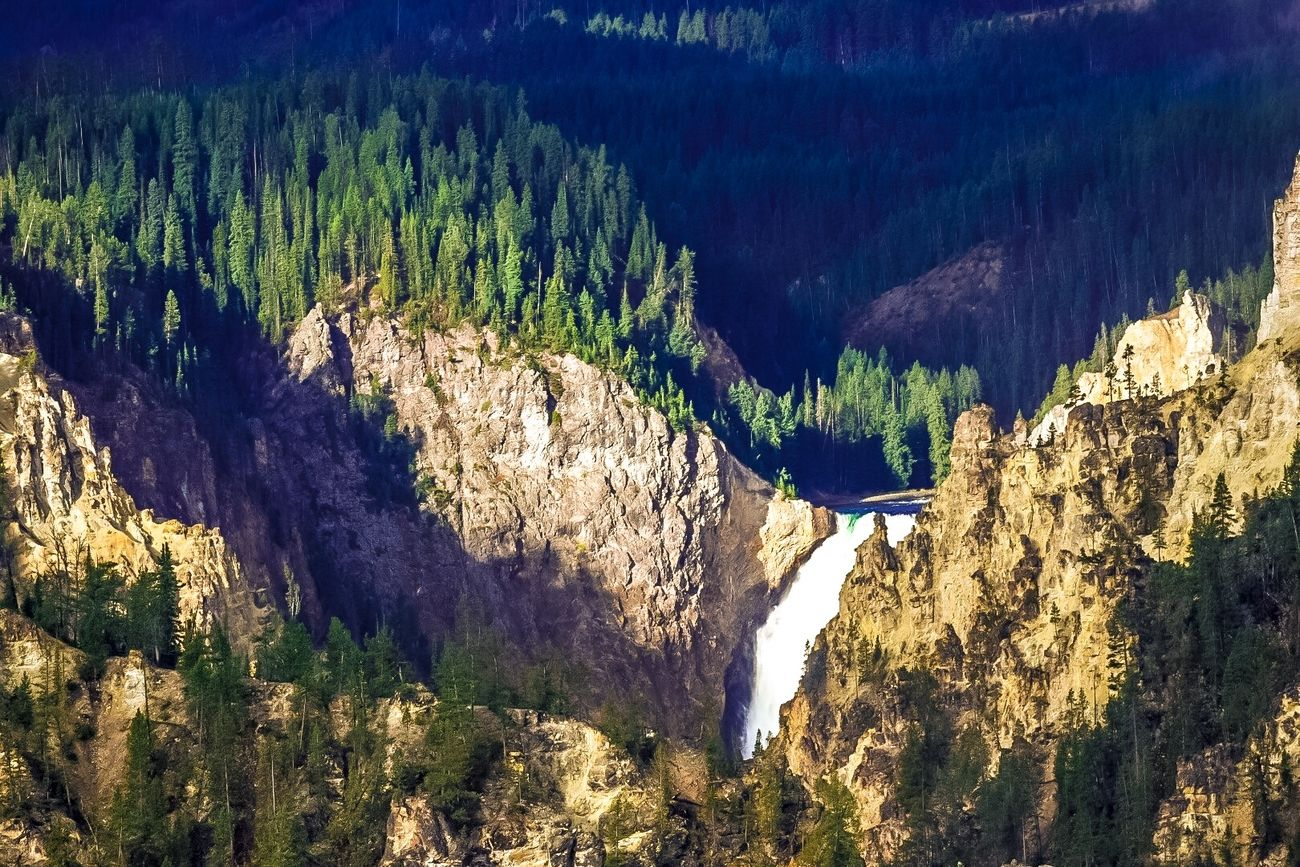 Waterfall in the Grand Canyon of Yellowstone, morning sunlight on Falls, green forest golden canyon walls.