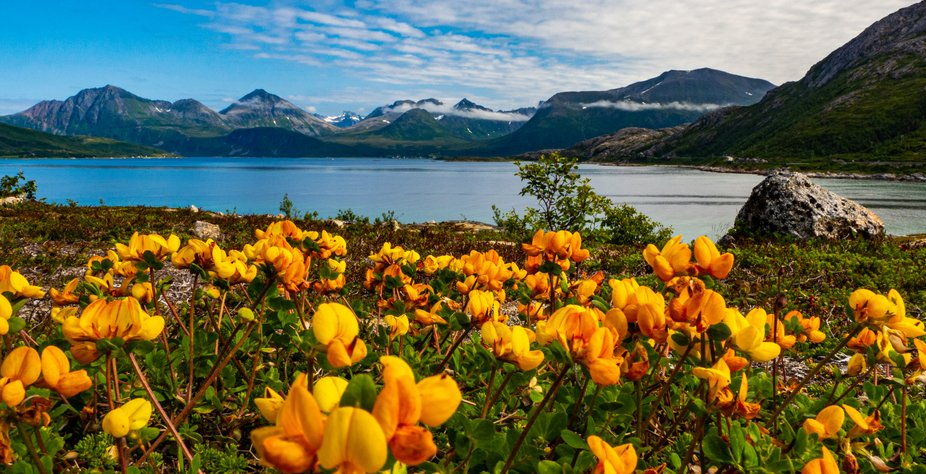 These low bright orange flowers caught my attention. With the fjord in the background I was in awe.