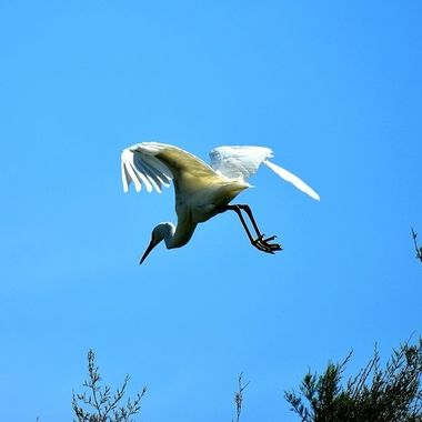 Taken in the birds park in Camargues (south of France)
