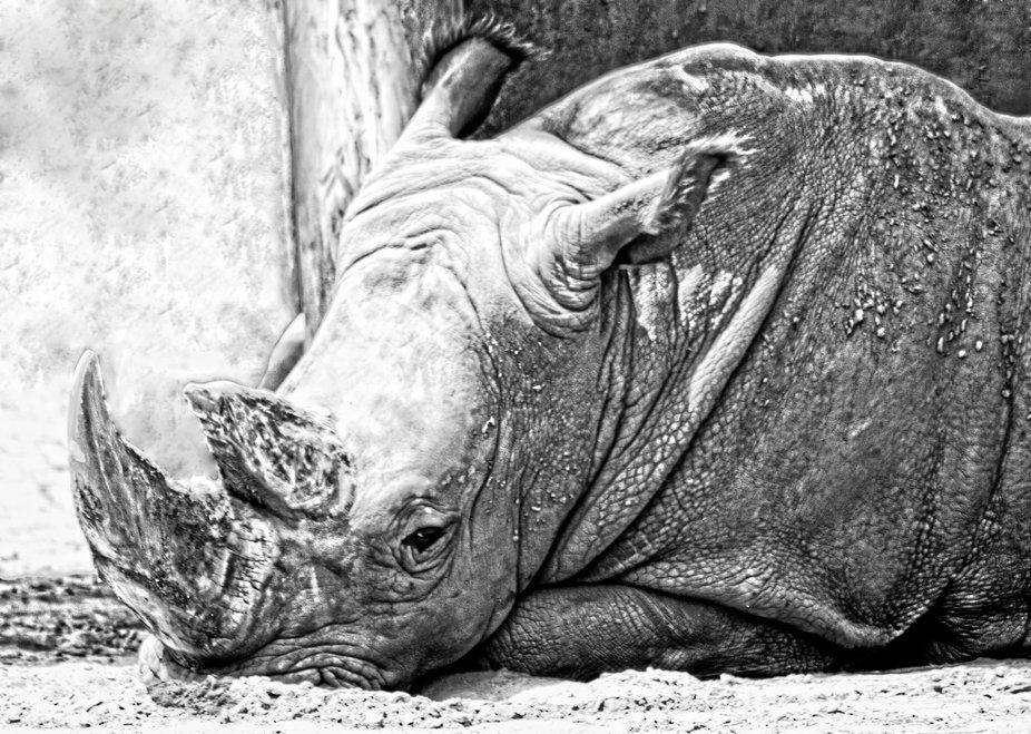 Zoo131