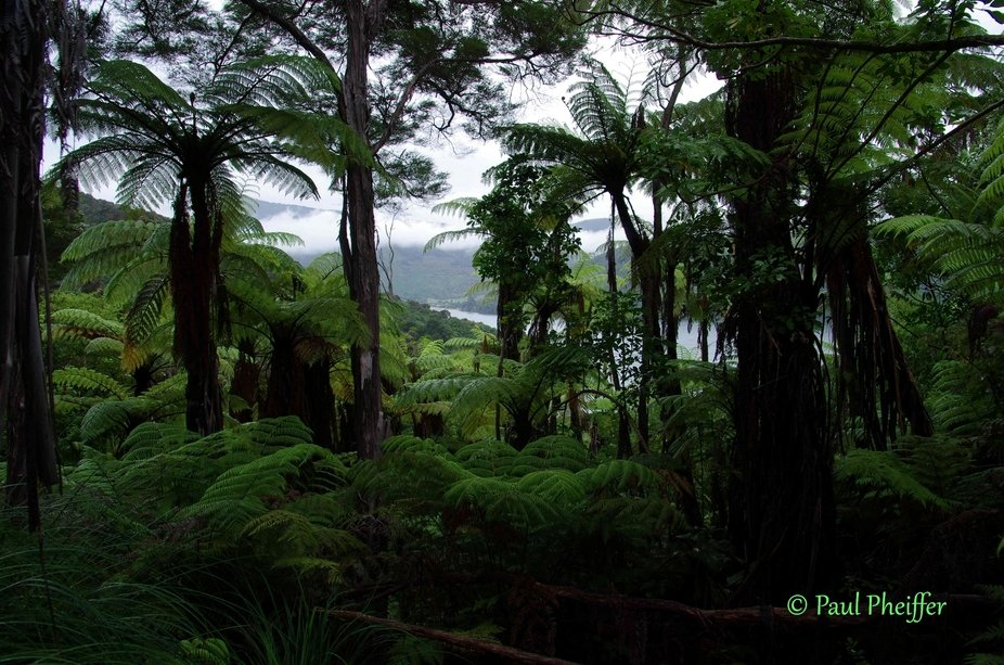 There is a short hiking trail starting in Momorangi Bay caravan park that goes up the mountain be...