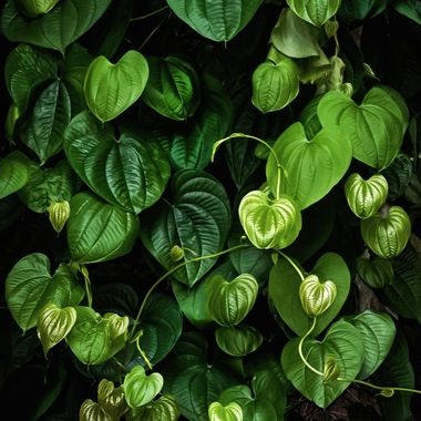 Green Hearts NW