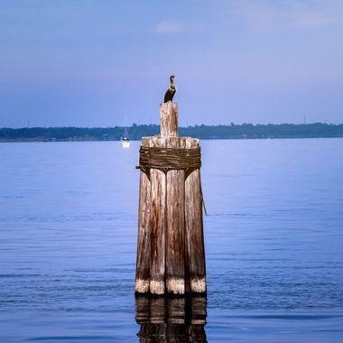 Anhinga on Lake Monroe NW