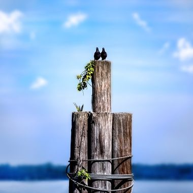 Love Birds on Lake Monroe NW