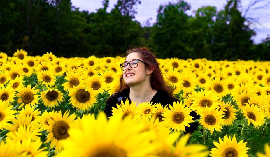 basking in the sunflowers