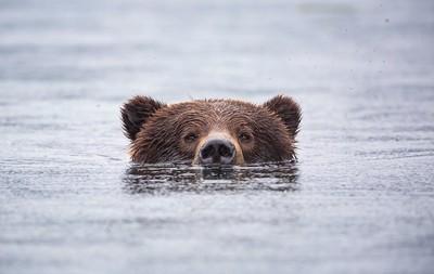 Swimming Rocky.