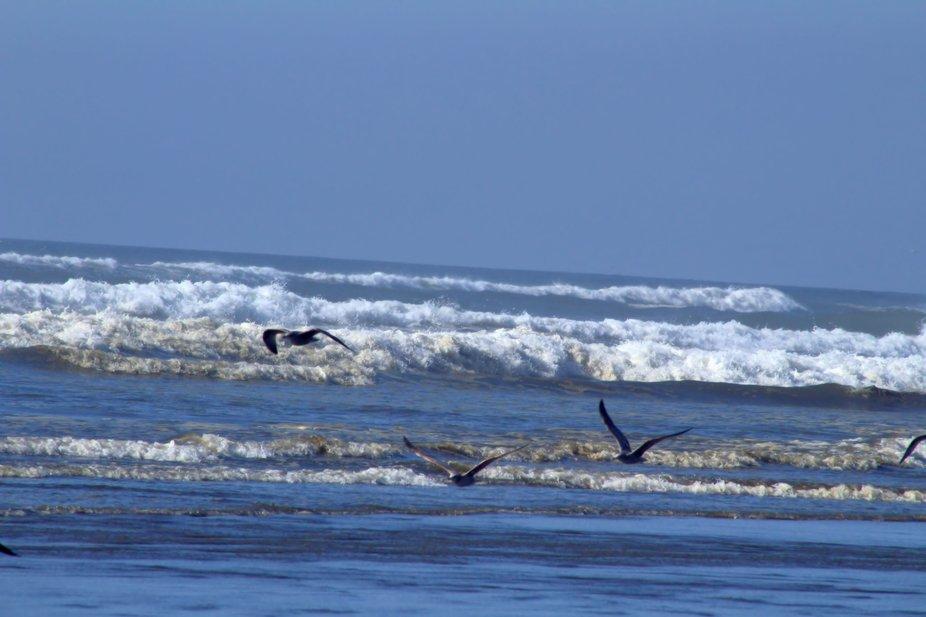 Ocean Shores 2