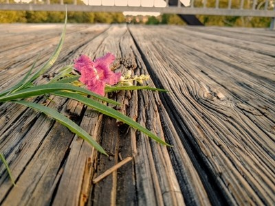Faust Flower Bridge