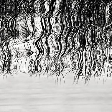 Ripples NW