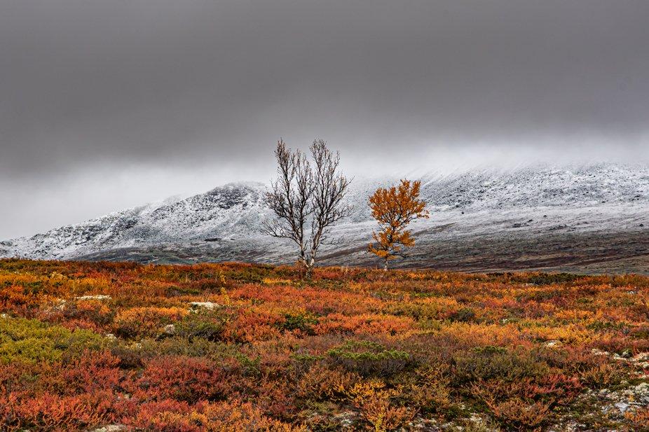 Rondane Norway