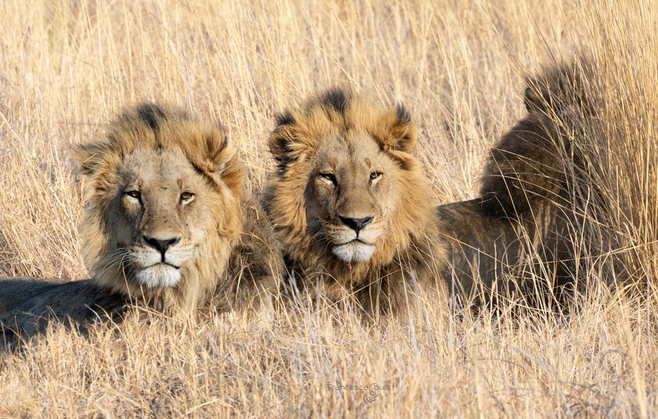 Brothers Male to Okavango Delta