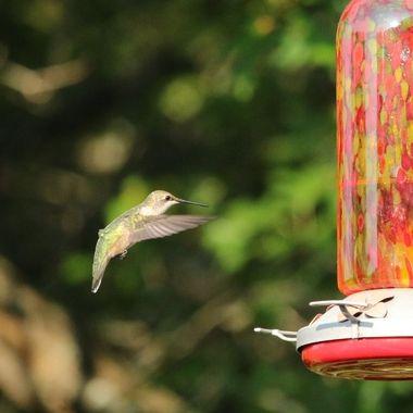 Hummingbird Series Ii