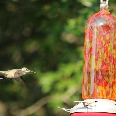 Hummingbird Series IIII