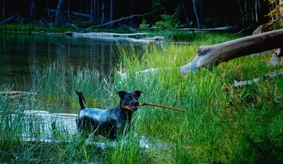 Maggie And The Stick |  Scout Lake just off Scenic Highway 12 near Boulder, Utah with @steadsok Michael 'Sandstone' Flynn, Titan and Maggie