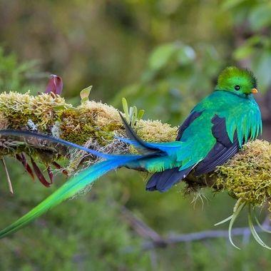 Quetzal IMG_0179