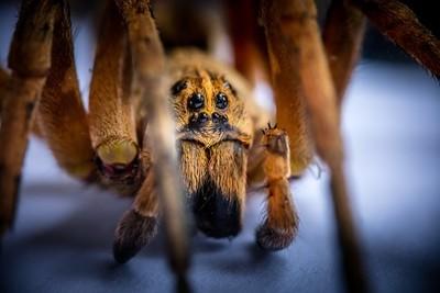 Macro portrait of a spider