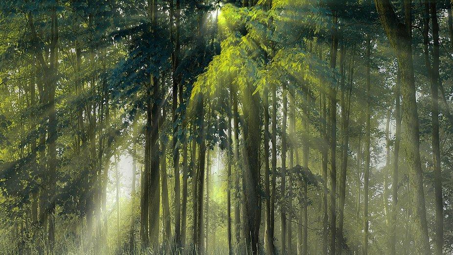 Nature Sunrays