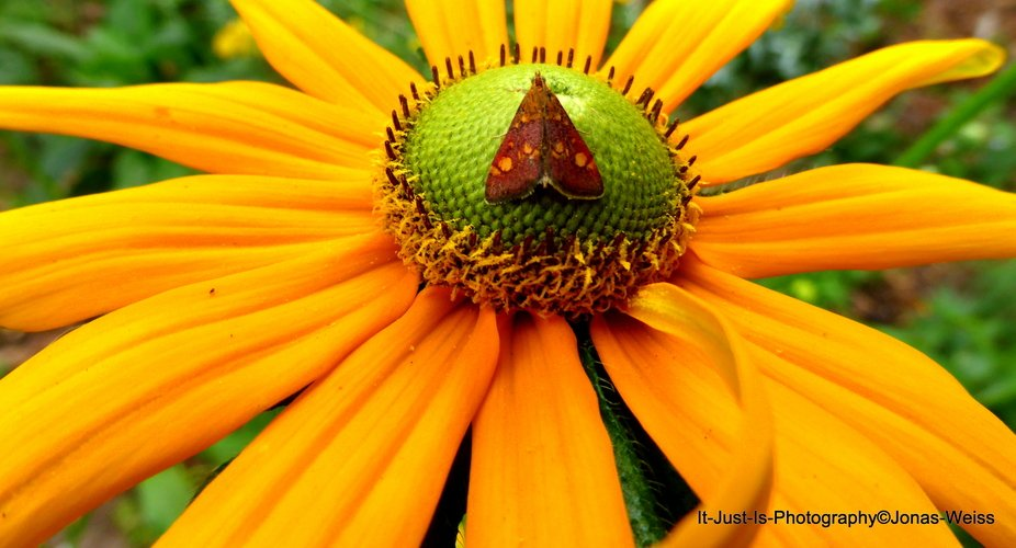 Insect on a Sunny Flower