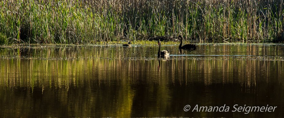 Reflections with some Black Swans