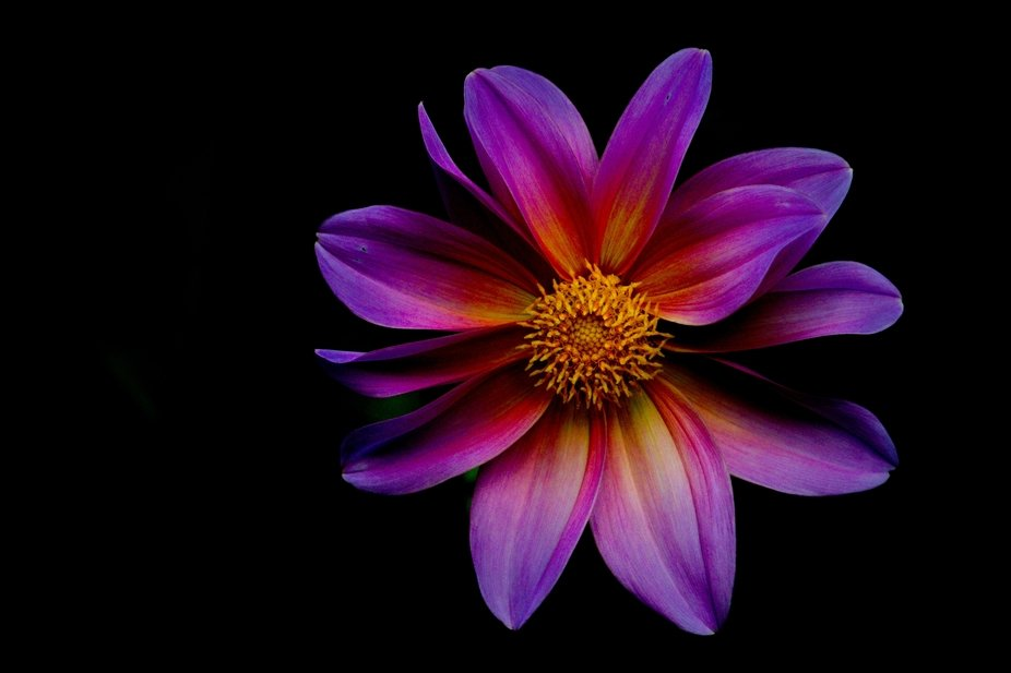 The beauty of a flower