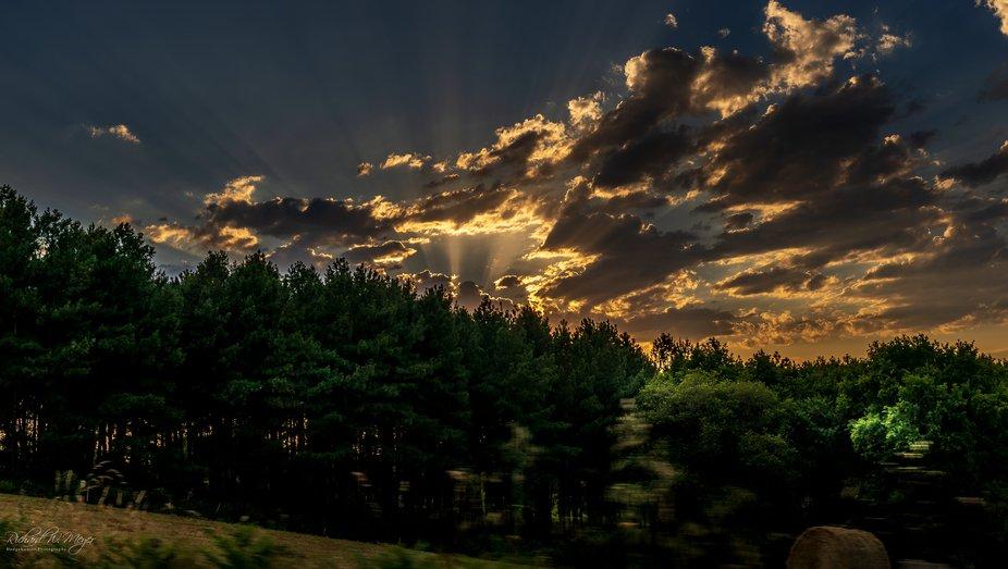 sunspot through the trees