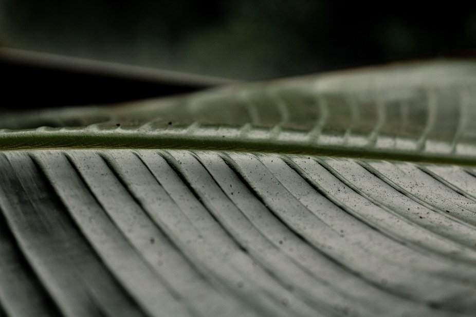 The texture of a leaf in a greenhouse