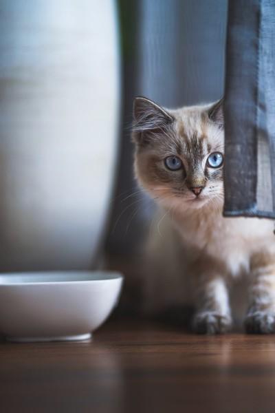 Coco the Cat also known as CocoCatventure..