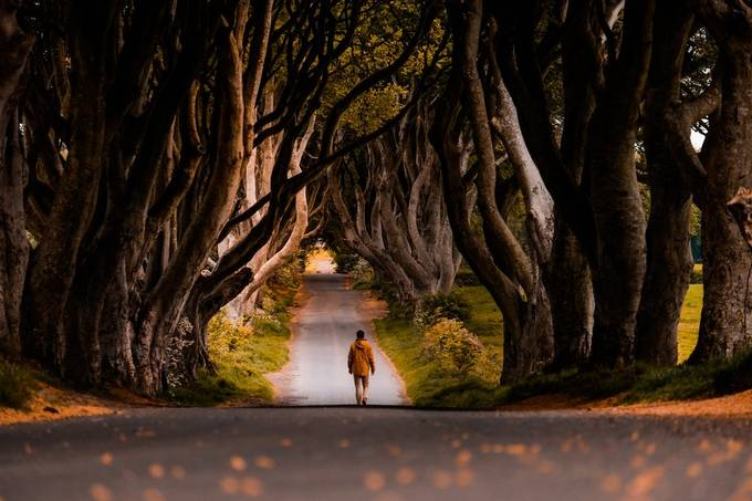The dark Hedges by albaem - ViewBug Homepage Photo Contest