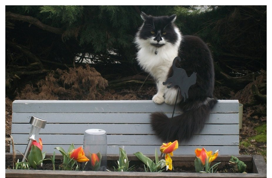 My Cat Mitsy who loved this spot above my tulip box