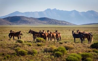 Mustang Herd under the Rockies
