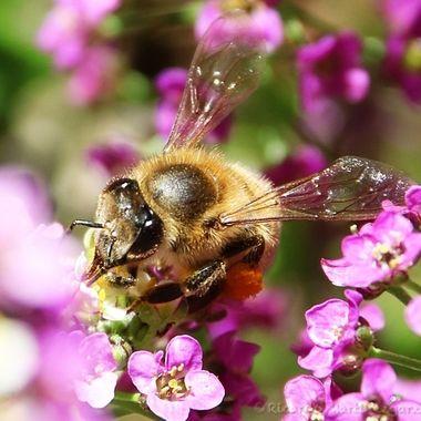 Nectar slurping