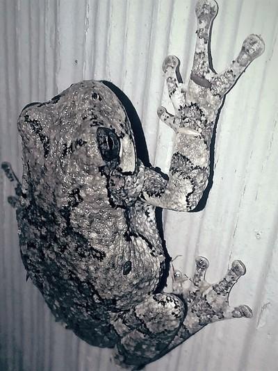 Frog Chillin