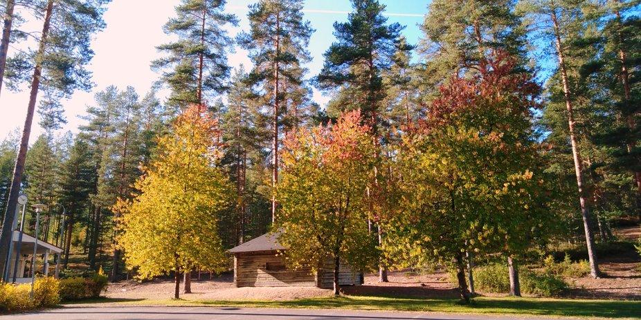 Sunny autumnday