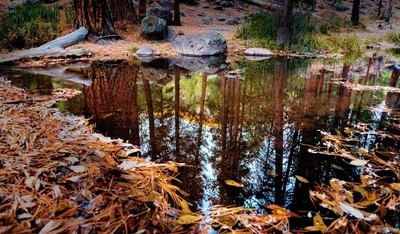 Red Rock Reflection - Fall on the Upper Santa Clara River in Pine Valley, Utah. Another great adventure with @steadsok
