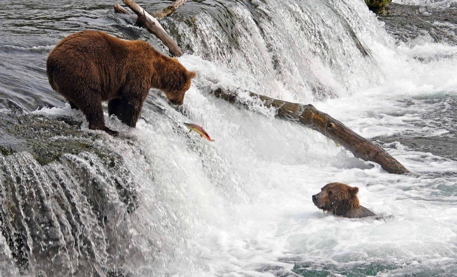 Brooks Falls, Katmai National Park Alaska