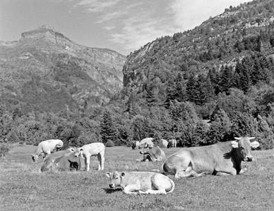 Buharuelo, Huesca Province, Aragon, Spain, July 2019