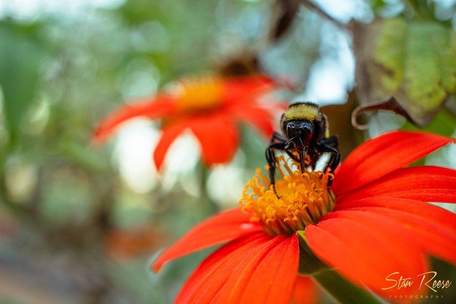 "Bees are the ""buzz"" word these days in the wonderful world of conservation. I h..."