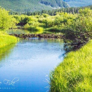 Lacy Creek near Wise River, Montana. Notice the beaver dam about 2/3 of the way up the creek.  Many of my photos are for sale, please click over to my photography store and take a peek. I have something for just about anyone who loves nature.