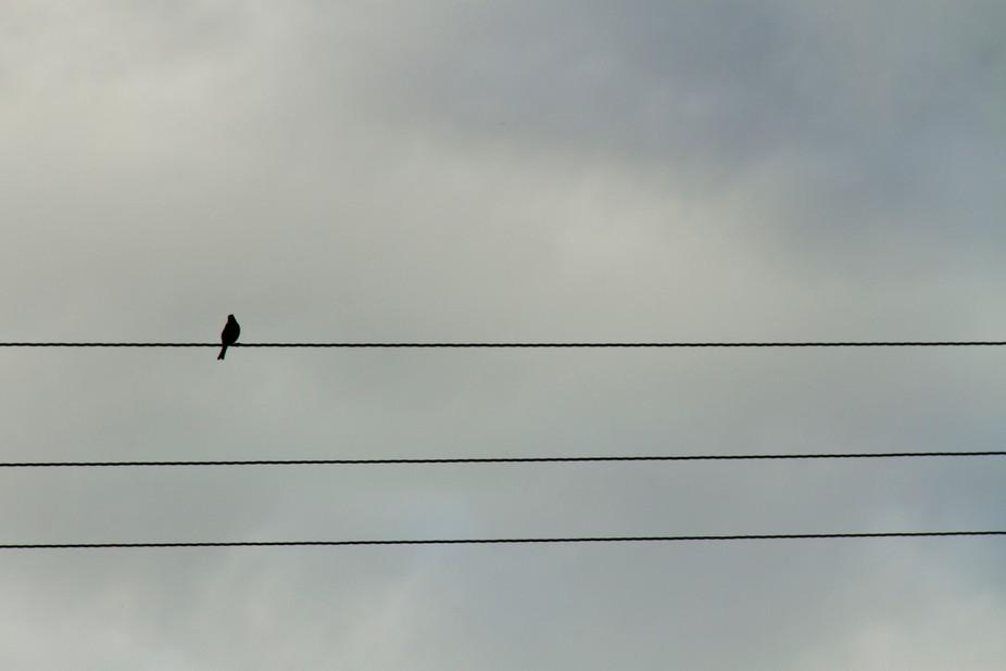 3 lines, 1 bird