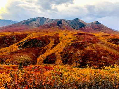 Rivers of yellow in the arctic tundra
