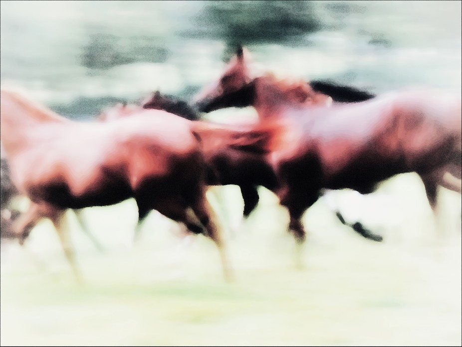 An abstract/impressionistic edge with camera  movement as yearling Thoroughbred fillies ran in th...