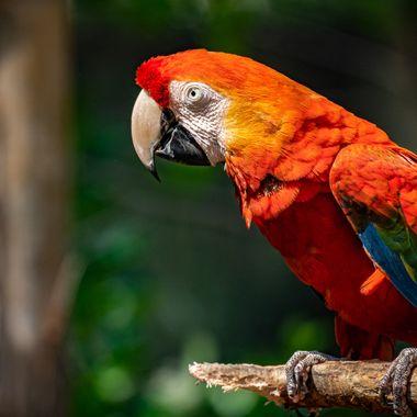 Macaw In Portrait ...