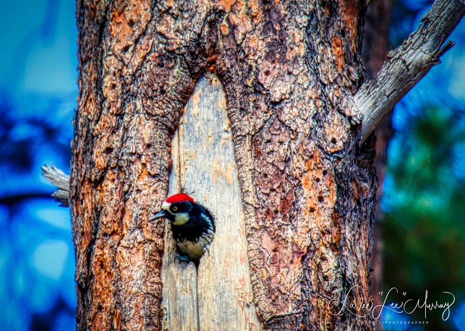 Taken at Goldwater Lake in Prescott, AZ - There were two adults and three youngsters...