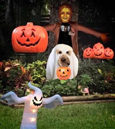 A Hillary Halloween