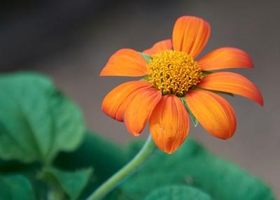 Orange Flower (edit)