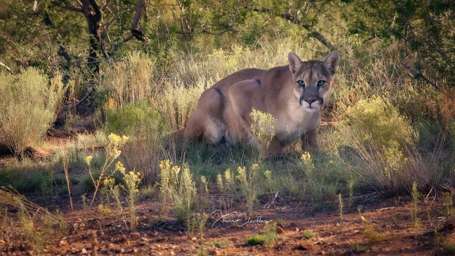 Captive ~ Out of Africa photography Workshop with Kathleen Reeder Photography provided an opportu...