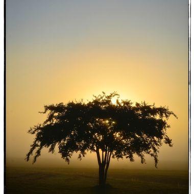 Sunrise Tree 3 23x25